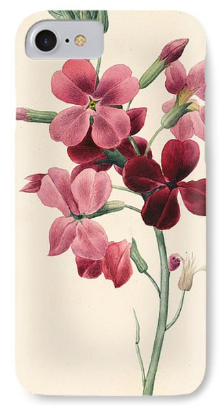 Matthiola IPhone Case by Louise D'Orleans