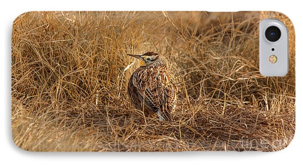 Meadowlark Hiding In Grass IPhone Case by Robert Frederick
