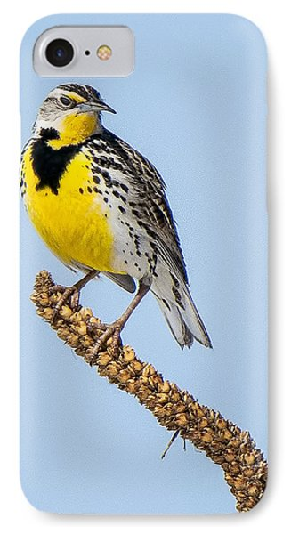Meadowlark On Mullein Stalk IPhone Case by Stephen Johnson