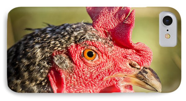Mesmerized - Chicken - Wyoming IPhone Case by Diane Mintle