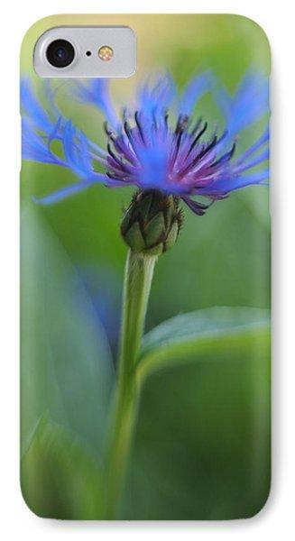 Mountain Bluet Flower IPhone Case by Don Zawadiwsky