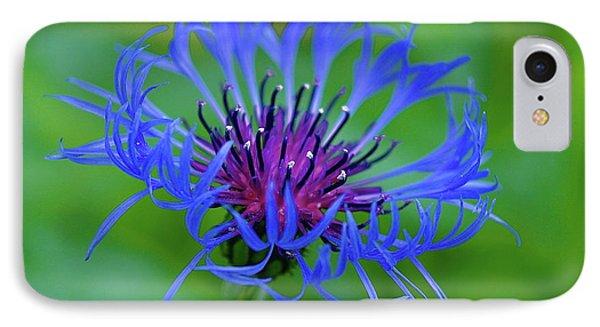 Mountain Cornflower IPhone Case by Byron Varvarigos