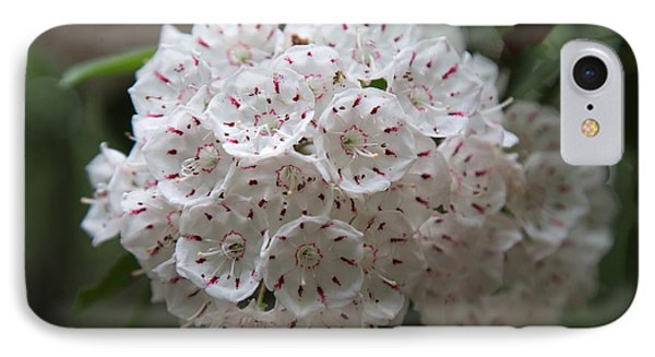 Mountain Laurels IPhone Case by Andy Miller