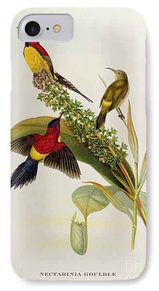 Nectarinia Gouldae IPhone Case by John Gould