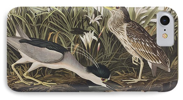 Night Heron Or Qua Bird IPhone Case by John James Audubon