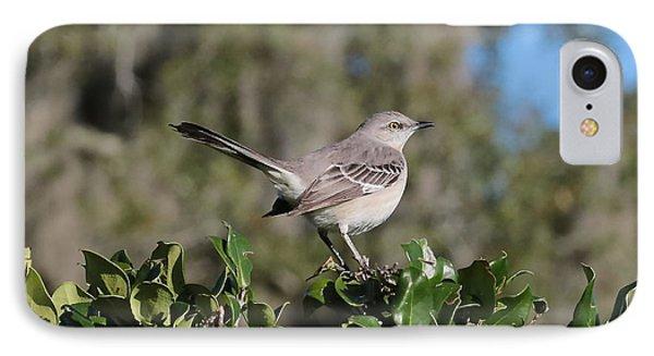 Northern Mockingbird IPhone Case by Carol Groenen