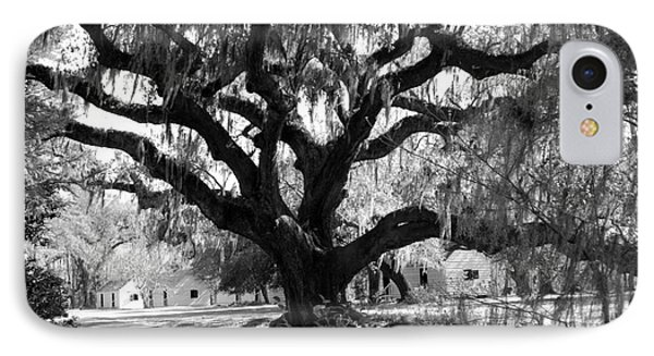 Old Plantation Tree Phone Case by Melody Jones