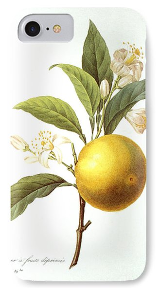 Orange Tree Phone Case by Granger