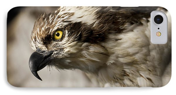 Osprey IPhone Case by Adam Romanowicz