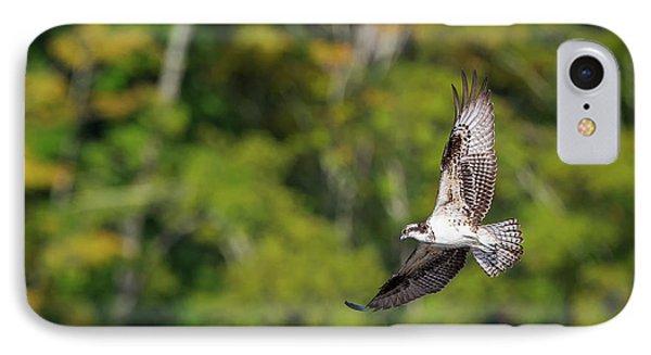 Osprey IPhone Case by Bill Wakeley