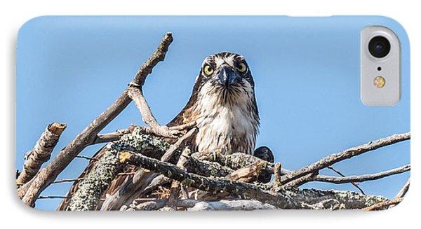 Osprey Eyes IPhone 7 Case by Paul Freidlund