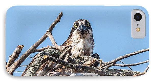 Osprey Eyes IPhone Case by Paul Freidlund
