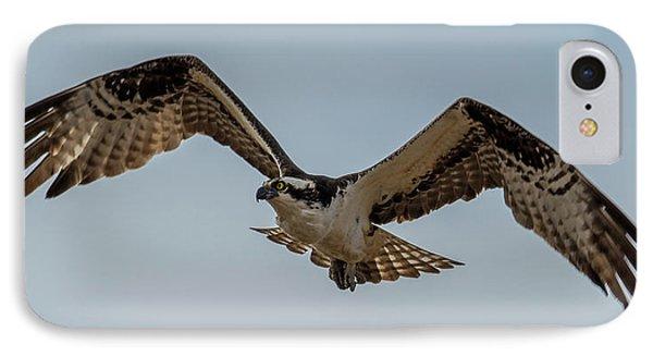 Osprey Flying IPhone 7 Case by Paul Freidlund