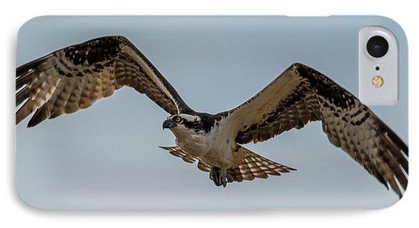 Osprey Flying IPhone Case by Paul Freidlund