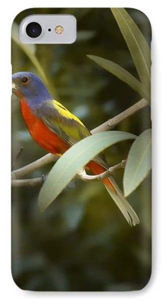 Painted Bunting Male IPhone Case by Phill Doherty