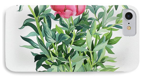 Peonies  IPhone Case by Christopher Ryland