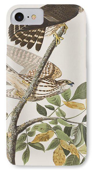 Pigeon Hawk IPhone Case by John James Audubon