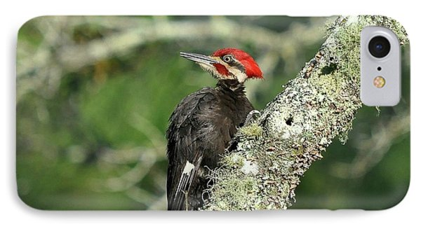 Pileated Perch IPhone 7 Case by Al Powell Photography USA