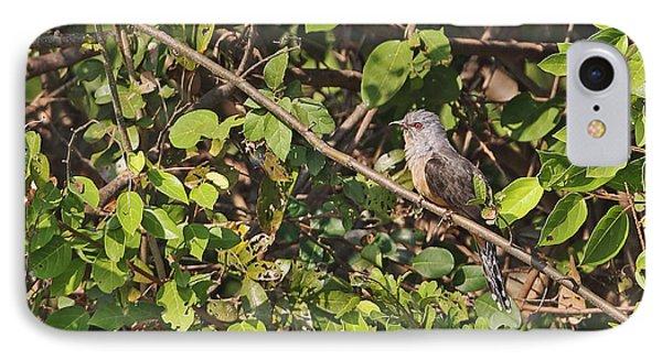 Plaintive Cuckoo IPhone Case by Neil Bowman/FLPA