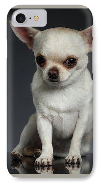 Portrait Little Chihuahua Dog Sitting On Dark Backgroun IPhone Case by Sergey Taran