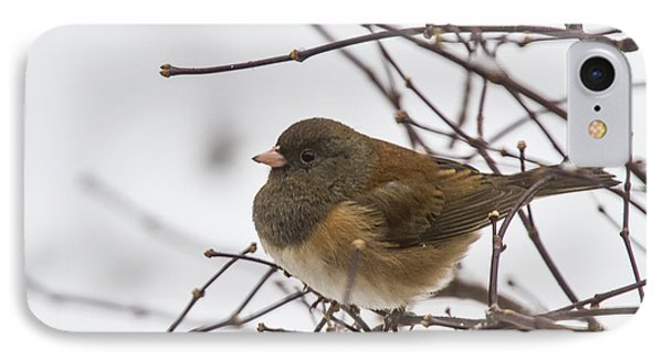 Puffed Up Junco IPhone Case by Jean Noren