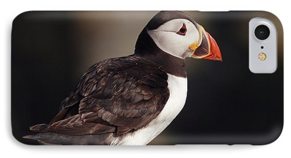 Puffin On Rock Phone Case by Grant Glendinning