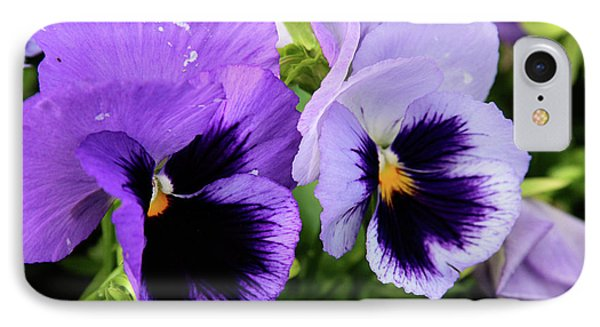 Purple Pansies IPhone Case by Toni Hopper
