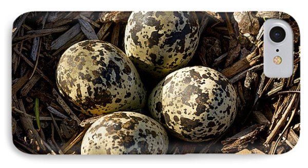 Quartet Of Killdeer Eggs By Jean Noren IPhone 7 Case by Jean Noren