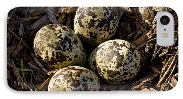 Quartet Of Killdeer Eggs By Jean Noren IPhone Case by Jean Noren