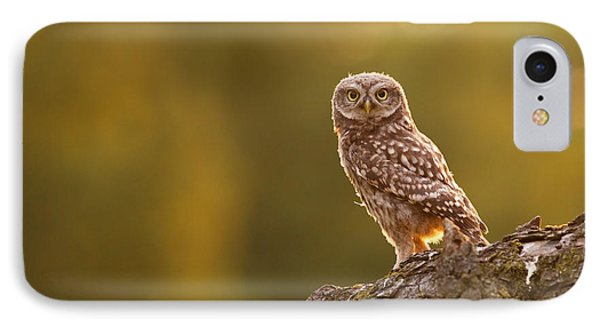 Qui, Moi? Little Owlet In Warm Light IPhone Case by Roeselien Raimond