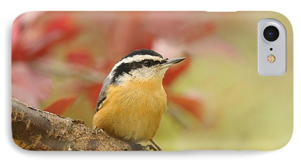 Red Breasted Nuthatch  Phone Case by Lara Ellis