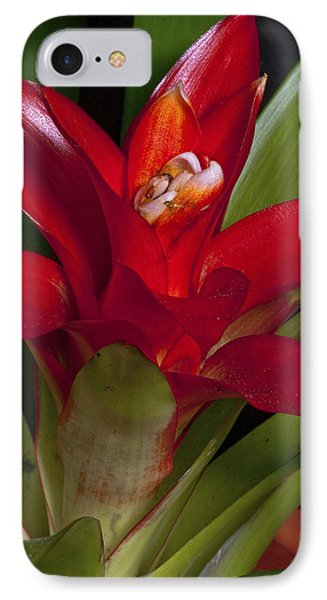 Red Bromiliad Phone Case by Christopher Holmes