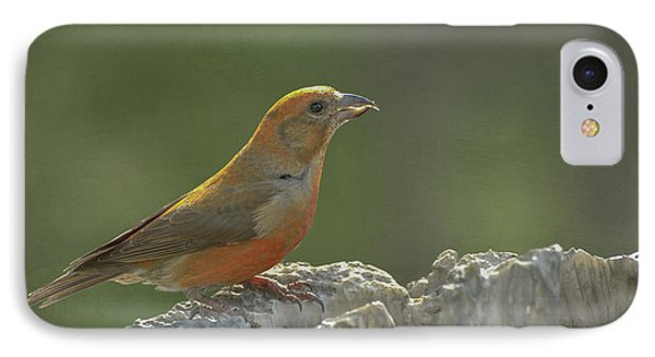 Red Crossbill IPhone 7 Case by Constance Puttkemery