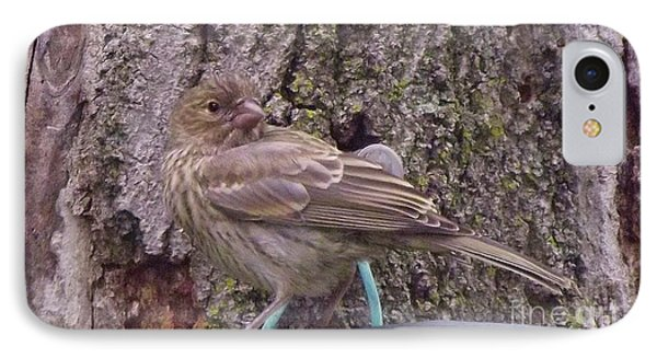 Red Crossbill Female  Indiana  Summer IPhone 7 Case by Rory Cubel