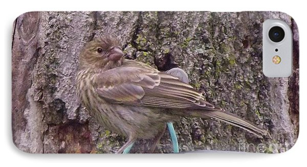 Red Crossbill Female  Indiana  Summer IPhone Case by Rory Cubel