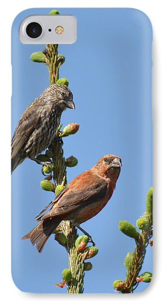 Red Crossbill Pair IPhone 7 Case by Alan Lenk