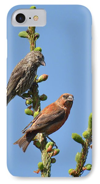 Red Crossbill Pair IPhone Case by Alan Lenk