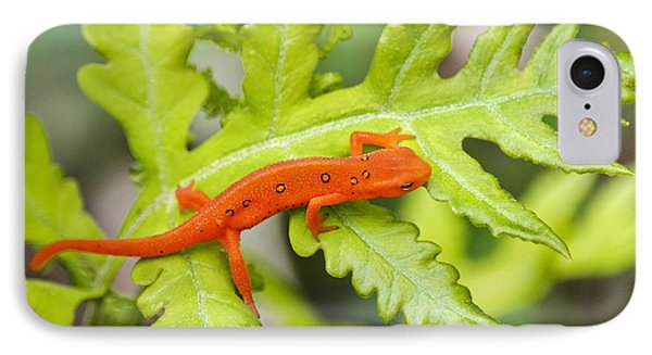 Red Eft Eastern Newt IPhone 7 Case by Christina Rollo