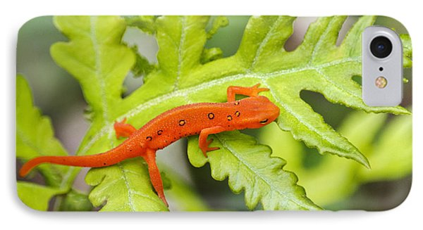 Red Eft Eastern Newt IPhone Case by Christina Rollo