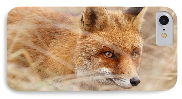 Red Fox On The Hunt IPhone Case by Roeselien Raimond