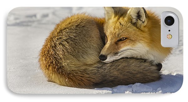 Red Fox Resting IPhone Case by Susan Candelario