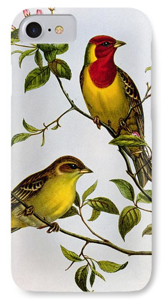 Red Headed Bunting IPhone Case by John Gould