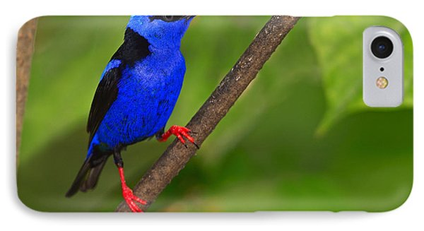 Red-legged Honeycreeper Phone Case by Tony Beck
