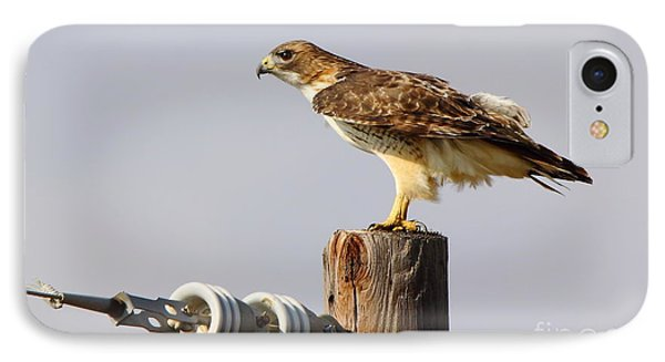 Red Tailed Hawk Perched Phone Case by Robert Frederick