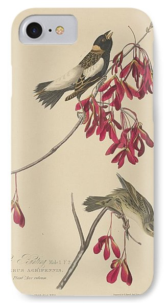Rice Bunting IPhone 7 Case by John James Audubon