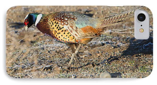 Ring-necked Pheasant Rooster IPhone Case by Mike Dawson