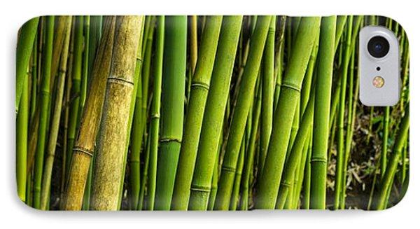 Road To Hana Bamboo Panorama - Maui Hawaii IPhone Case by Brian Harig