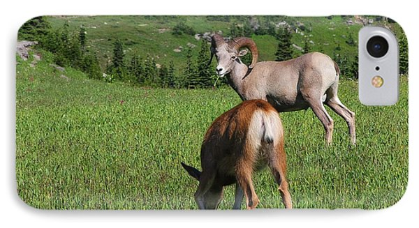 Rocky Mountain Bighorn Sheep Ram And Mule Deer Doe Glacier National Park Mt Phone Case by Christine Till