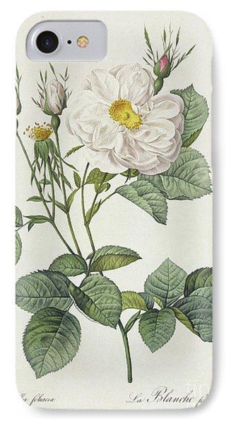 Rosa Alba Foliacea IPhone Case by Pierre Joseph Redoute