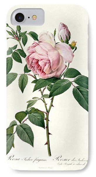 Rosa Chinensis And Rosa Gigantea IPhone Case by Joseph Pierre Redoute